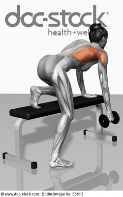 muscles, gym, weight training, one arm dumbbell row ...