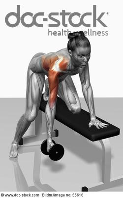 The muscles involved in one arm dumbbell row exercises ...