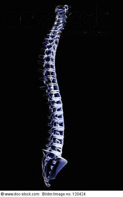 Wirbelsäule Röntgenbild