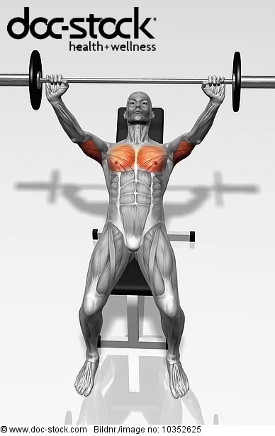 The muscles involved in the bench press incline exercise ...