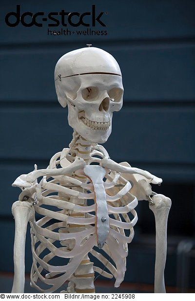 Anatomie,anatomisch,Brustbein,Gelenk,Kiefer,Knochen ...