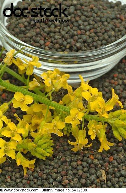 Colza - Rape - Turnip - food - oil - foodplant - oilplant - agriculture - Colza - pianta medicinale - olio -