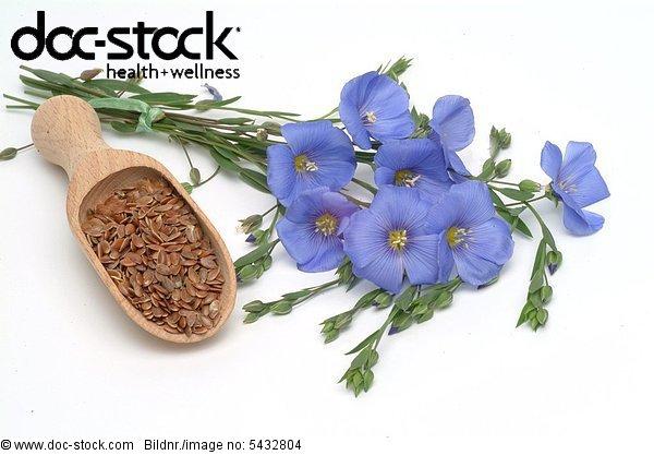 Linum usitatissimum - Common Flax - medicinal plant - agriculture plant -