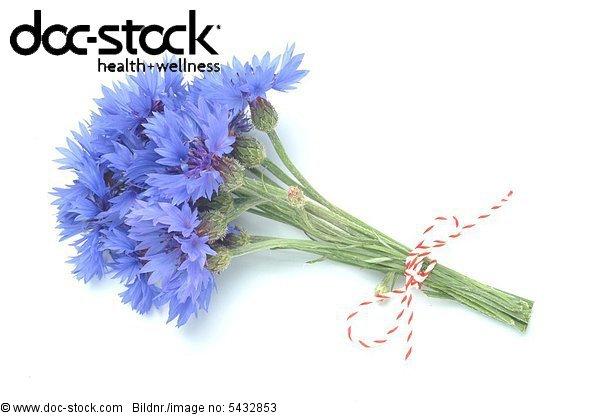 Centaurea cyanus - Cornflower - medicinal plant - Fiordalismo vero -