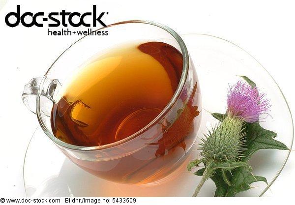Cotton thistle - scotch thistle - medicinal tea - herbtea - medicinal plant - herb - Onopordum acanthium - onopordon - Onopordo tomentoso - te