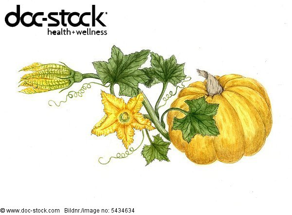 pumpkin with leaves and blossoms