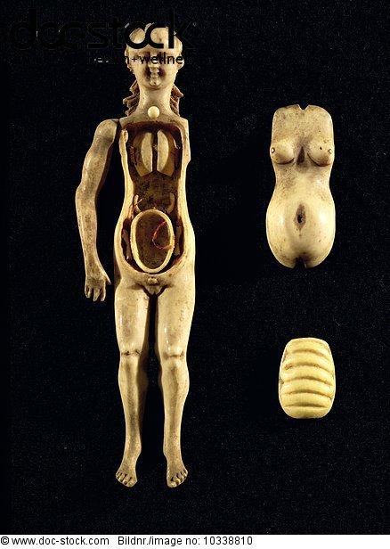Anatomie,Elfenbein,Mensch,Puppe,zeigen - Lizenzpflichtiges Bild ...