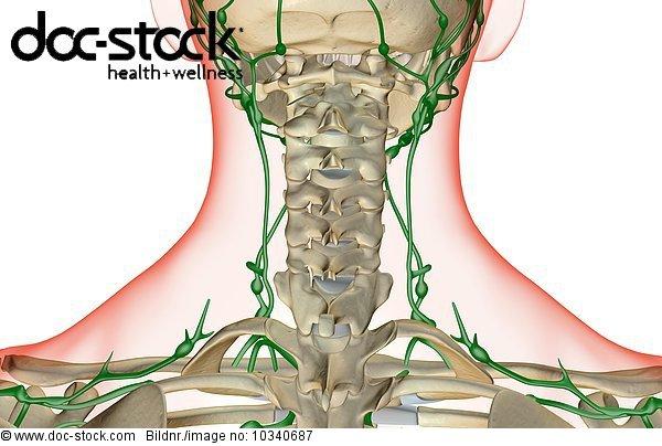 Anatomie,Angebot,Ansicht,Bodenhöhe,Getont,hinter,koloriert ...