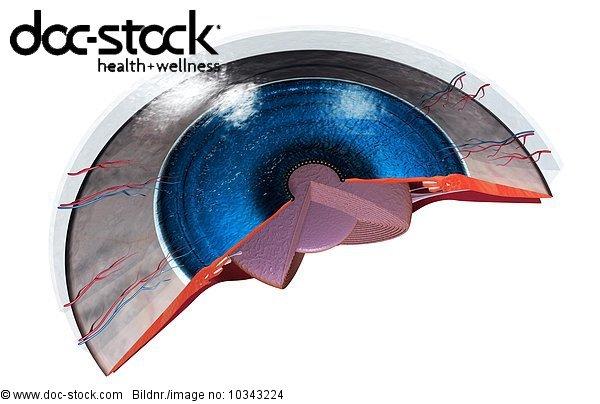 Anatomie,Anschnitt,Blendenfleck,entfernen,entfernt,hinter