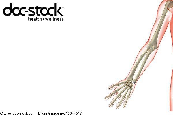Anatomie,Ansicht,Bodenhöhe,Getont,koloriert,Menschliche Gliedmaße ...