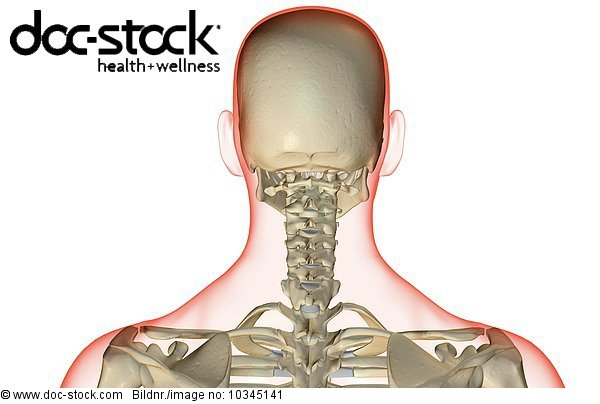 Knochen Hinterkopf