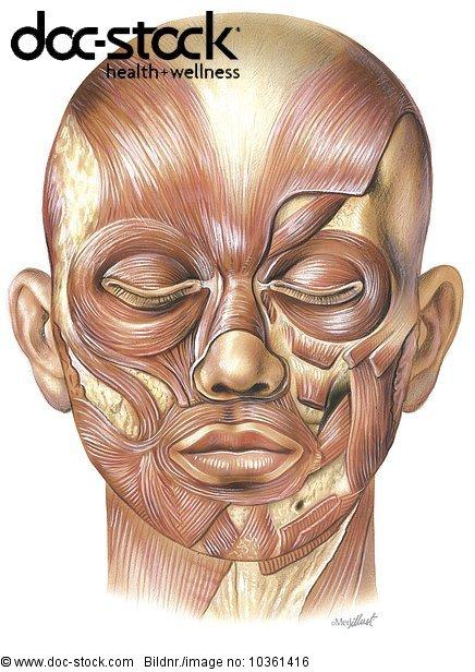Anatomie,anatomisch,anatomische Darstellung,Auge Augen,Backen Wangen ...