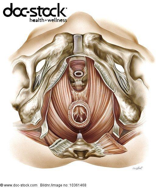 Anatomie,Anatomie-Modell Anatomiemodell Knochenmodell,anatomisch ...