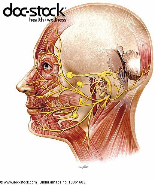 Anatomie,anatomisch,anatomische Darstellung,Auge Augen,Biologie,doc ...
