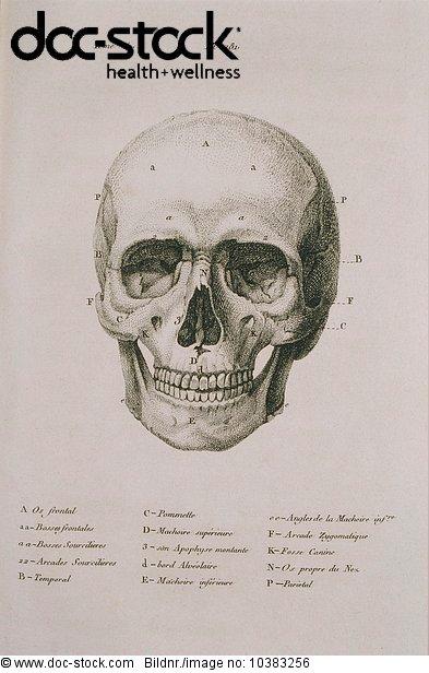 Anatomie,Ausbildung Medizin Gesundheit,Bau der Körperteile,Caput ...