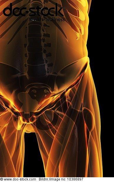 3D4M000006732,anterior,Arterien,Becken,Beckenarterien,Beckenboden ...