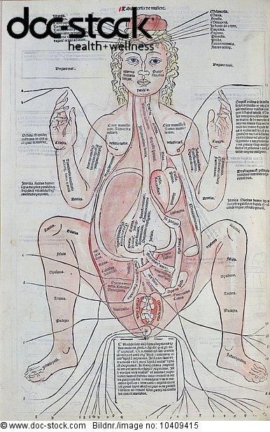 Architektur,Diagramm,Gebärmutter,Gebärmutter Uterus,Geschlechtsorgan ...