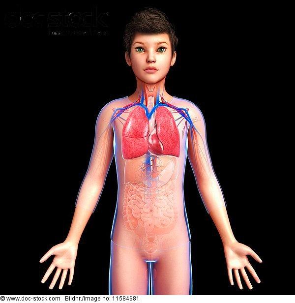 Beatmung,Biologie,Blutkreislauf,Composite,Digital Composite,f0180677