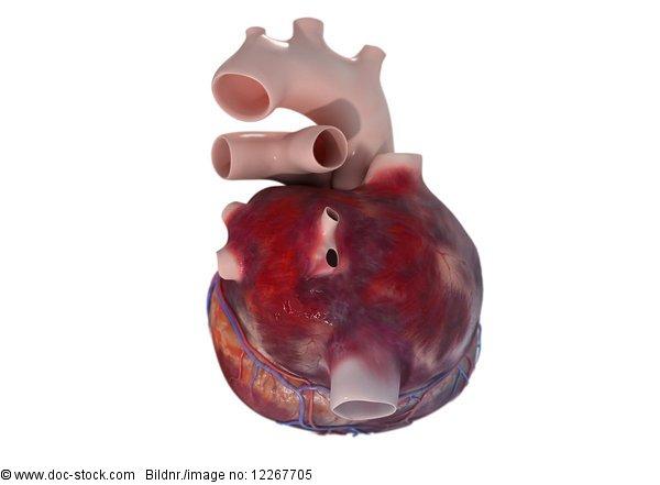 Menschliches Herz, 3d rendering, Illustration